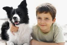 Zooterapie - jak nám zvířata pomáhají